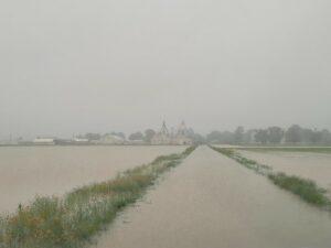 fields at the Stuttgart rice research center