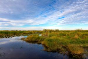 calcasieu parish wetland