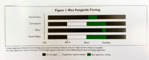 fungicide timing chart