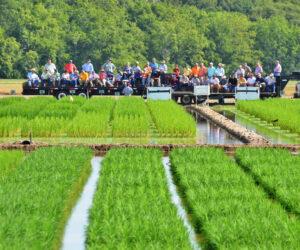 LSU Rice Field Day