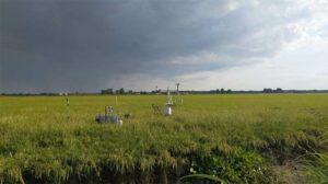 methane sensors in rice