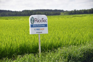 ricetec max-ace rice variety