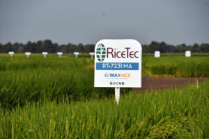new max-ace variety from ricetec