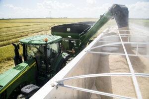 2020 arkansas rice harvest