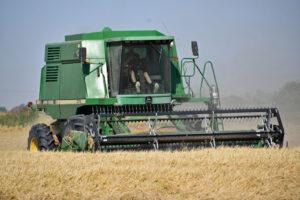 rice harvest near Biggs, California